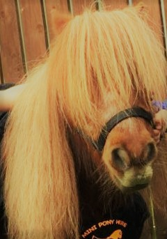 PLAYHOUSE Playtime: Mini Pony Workshop